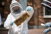 Bee keeping 1